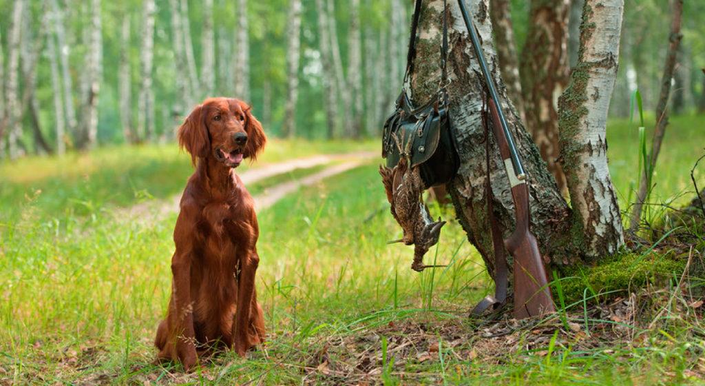 razze-cani-da-caccia