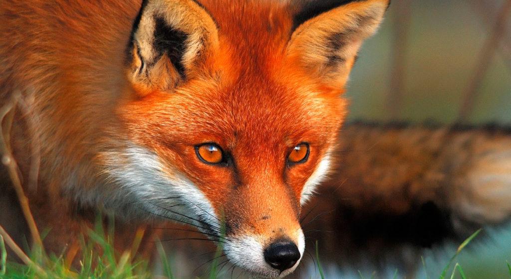 animali-selvatici-nelle-città